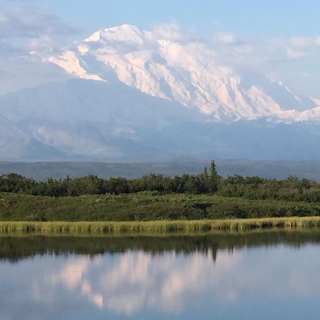The mountain and the Alaska range make an amazing appearance after days under cloud cover. Thanks to the crew at Camp Denali for leading our exploration of the park.