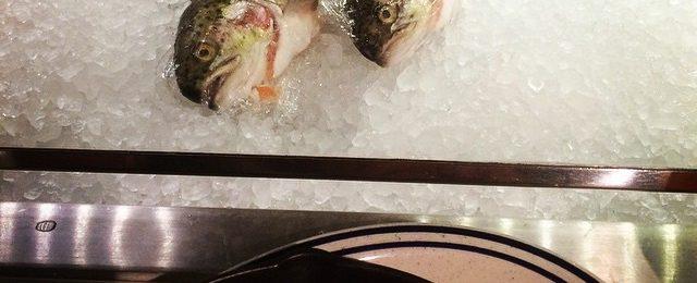 Fish watching my dinner of fish at fish