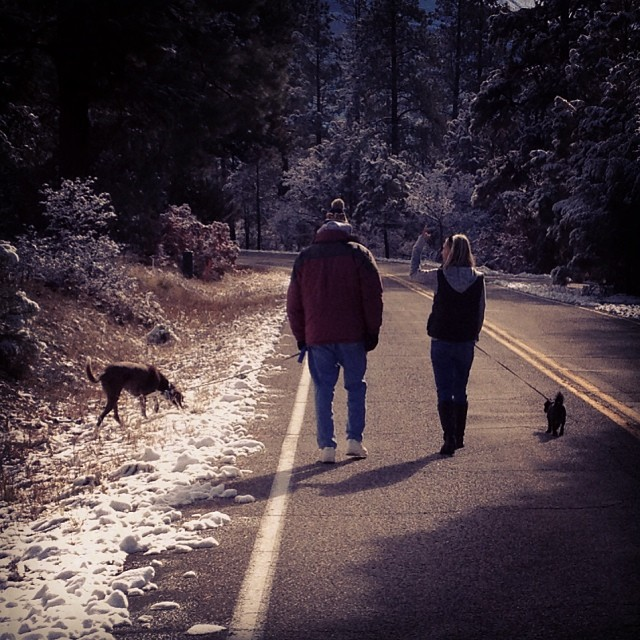 Perfect day for a walk up dad's hill with the doggies